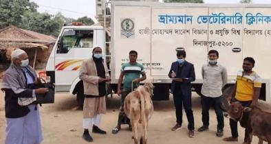 হাবিপ্রবি'র ভেটেরিনারি ক্লিনিকের বিনামূল্যে সেবা প্রদান