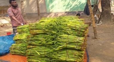 কুমিল্লার বরুড়ার কচুর লতি দেশের সীমানা পেরিয়ে রফতানি হচ্ছে বিদেশে