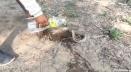 বিষধর সাপকে পানি পান করানোর ভিডিও ভাইরাল